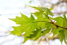 Free Pattern Of Leaves Stock Photos - 2444233