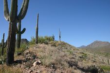 Free Saguaro Cactus And Hills Royalty Free Stock Photo - 2445865