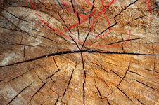Free Wood Stock Photos - 2446663