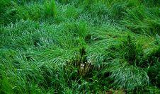 Grass Background Stock Photos