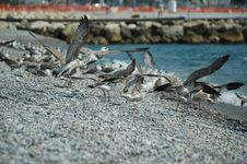 Free Birds Stock Image - 2447921