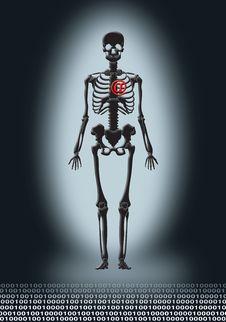Free Skeleton With Heart Stock Photos - 2448163