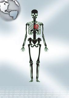 Free Skeleton In Gray Royalty Free Stock Photo - 2448175