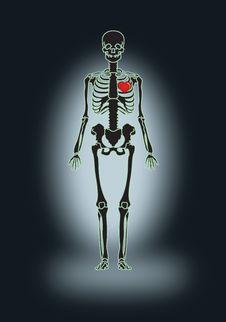 Free Skeleton Love Royalty Free Stock Images - 2448179
