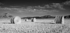 Free Field Of Hay Bales Royalty Free Stock Image - 2448346