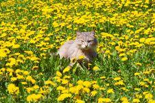 Free Cat Walks Stock Photography - 2448702