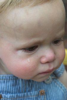 Free Baby Tear Stock Photos - 2449123