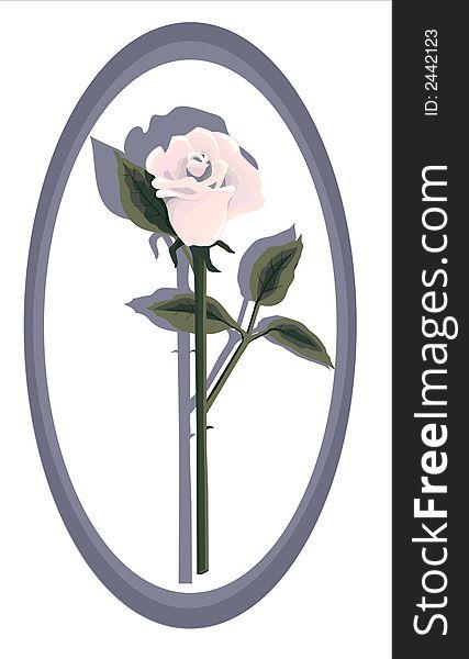 Designer Pink Rose