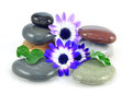 Free Zen Stones In Shallow Pool Stock Photo - 24406550