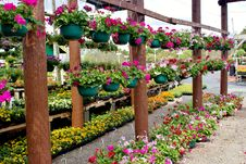 Flowers In Hanging Baskets Royalty Free Stock Images