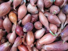Free Pearl Onion Stock Image - 24407511