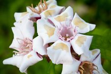 Free Tropical Flower Stock Photography - 24416202
