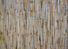 Old Bamboo / Reed Texture Stock Images