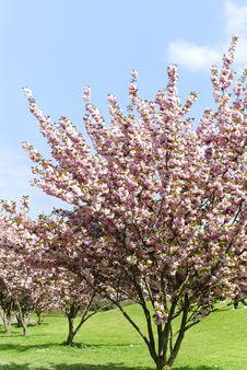 Free Rheinaue Park Royalty Free Stock Photo - 24418325