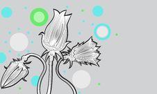 Free Tulips02 Royalty Free Stock Photos - 24418758