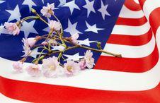 Free Cherry Blossom Sprig On American Flag Stock Photo - 24423470