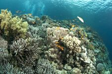 Free Colorful Coral Reef Stock Photo - 24425600