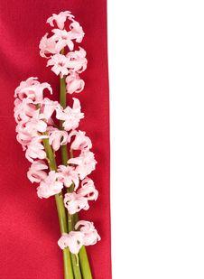 Free Pink Hyacinth Flower Royalty Free Stock Image - 24426936