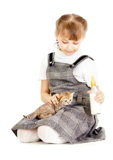 Free Girl Feeding British Kitten Royalty Free Stock Photography - 24428917