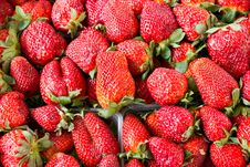 Free Strawberries Royalty Free Stock Photos - 24431248