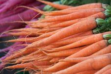 Free Carrots And Radish Royalty Free Stock Photography - 24431637