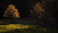 Free Golden Tree Stock Image - 24434121