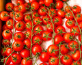 Free Cherry Tomatoes Stock Images - 24446174