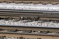 Free Railroad Track Stock Photo - 24447920