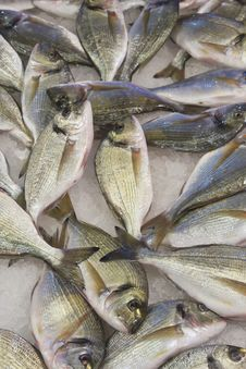 Fresh Fish At The Market Royalty Free Stock Image
