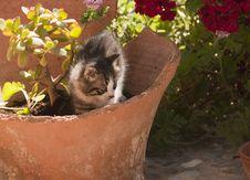 Free Sweet Cat Stock Photo - 24446170