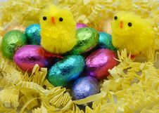 Free Easter Chicks Stock Photos - 24446483