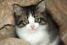 Free Sweet Cat Stock Photo - 24446830