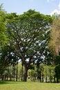 Free Old Big Tree Stock Photos - 24452703