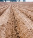 Free Cultivated Field Royalty Free Stock Image - 24456416
