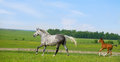 Free Mare And Foal Runs Gallop In Pasture Royalty Free Stock Photo - 24459045