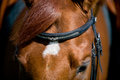 Free Horse Head With Eye Closeup. Royalty Free Stock Image - 24459056
