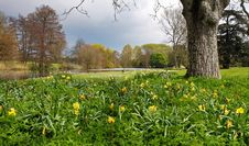 Free Arrival Of Spring In An English Park Stock Images - 24458994