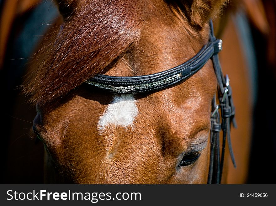 Horse head with eye closeup.