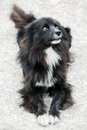 Free Homeless Stray Street Dog Royalty Free Stock Photography - 24468507