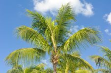 Free Palm Tree Stock Photography - 24465932