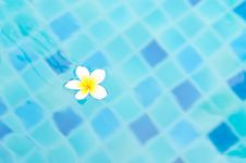 Free White Flower On Aqua Blue Water Stock Photos - 24470213