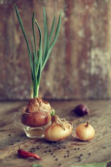 Free Onion Royalty Free Stock Photos - 24471128