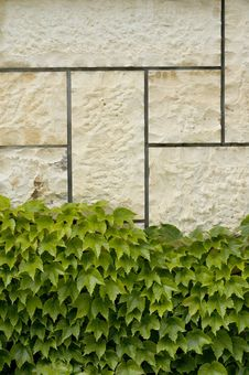 Free Stone Wall Dotted With Wine Stock Photos - 24473343