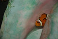 Free Tropical Clown Fish In Shell Royalty Free Stock Photos - 24480658