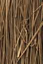 Free Straw Backround Stock Photo - 24488790