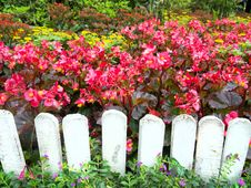 White Fence And Colorful Flowers. Royalty Free Stock Image