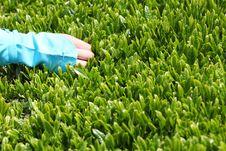 Free Tea Picking Stock Photo - 24485230