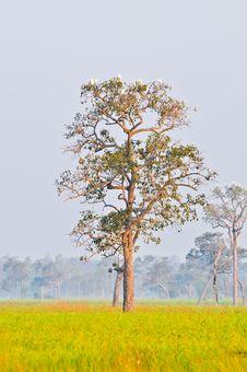 The White Birds On The Big Tree Stock Photo