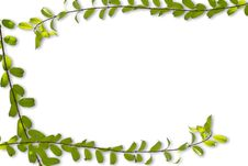 Free Green Leaf Frame Stock Photography - 24490682