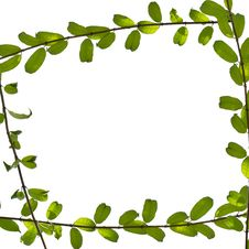 Free Green Leaf Frame Stock Photos - 24490703